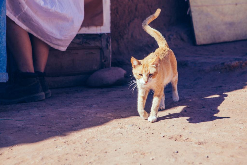 Marokko 2 Jessica Grossmann-4025