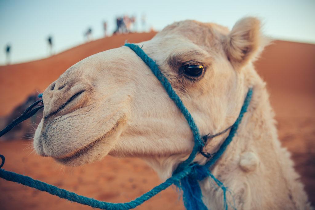 Marokko 2 Jessica Grossmann-4358
