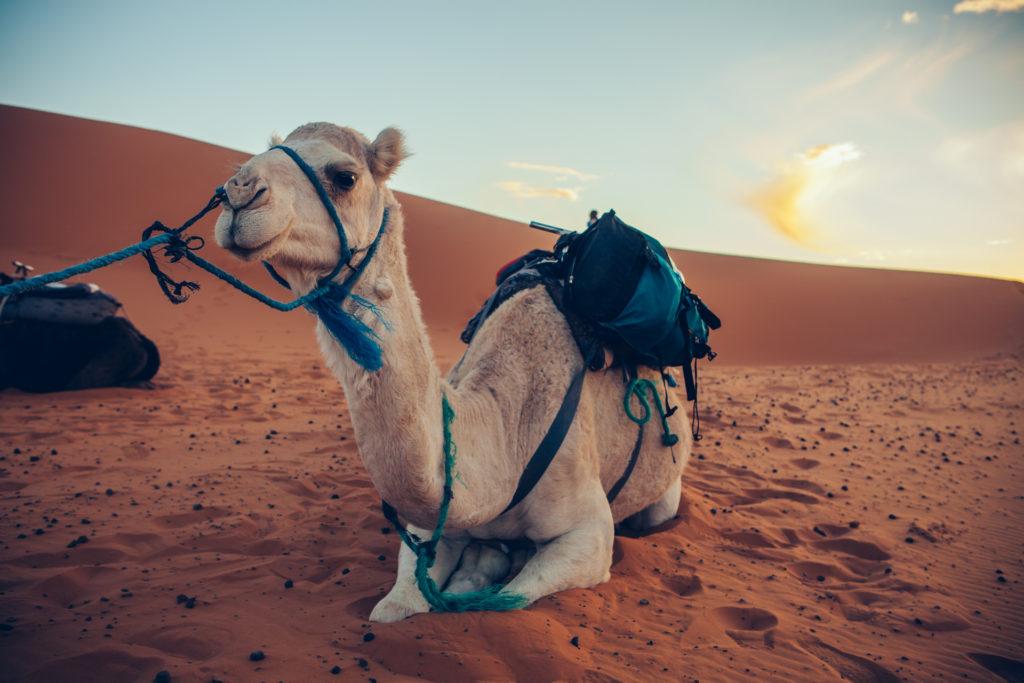 Marokko 2 Jessica Grossmann-4359