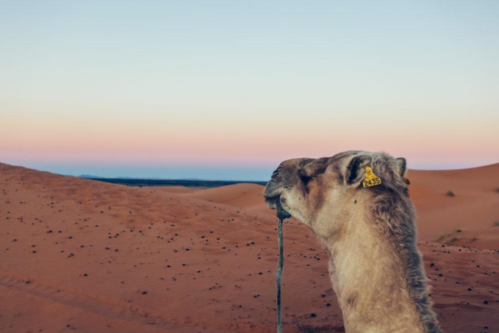 Marokko 2 Jessica Grossmann-4506